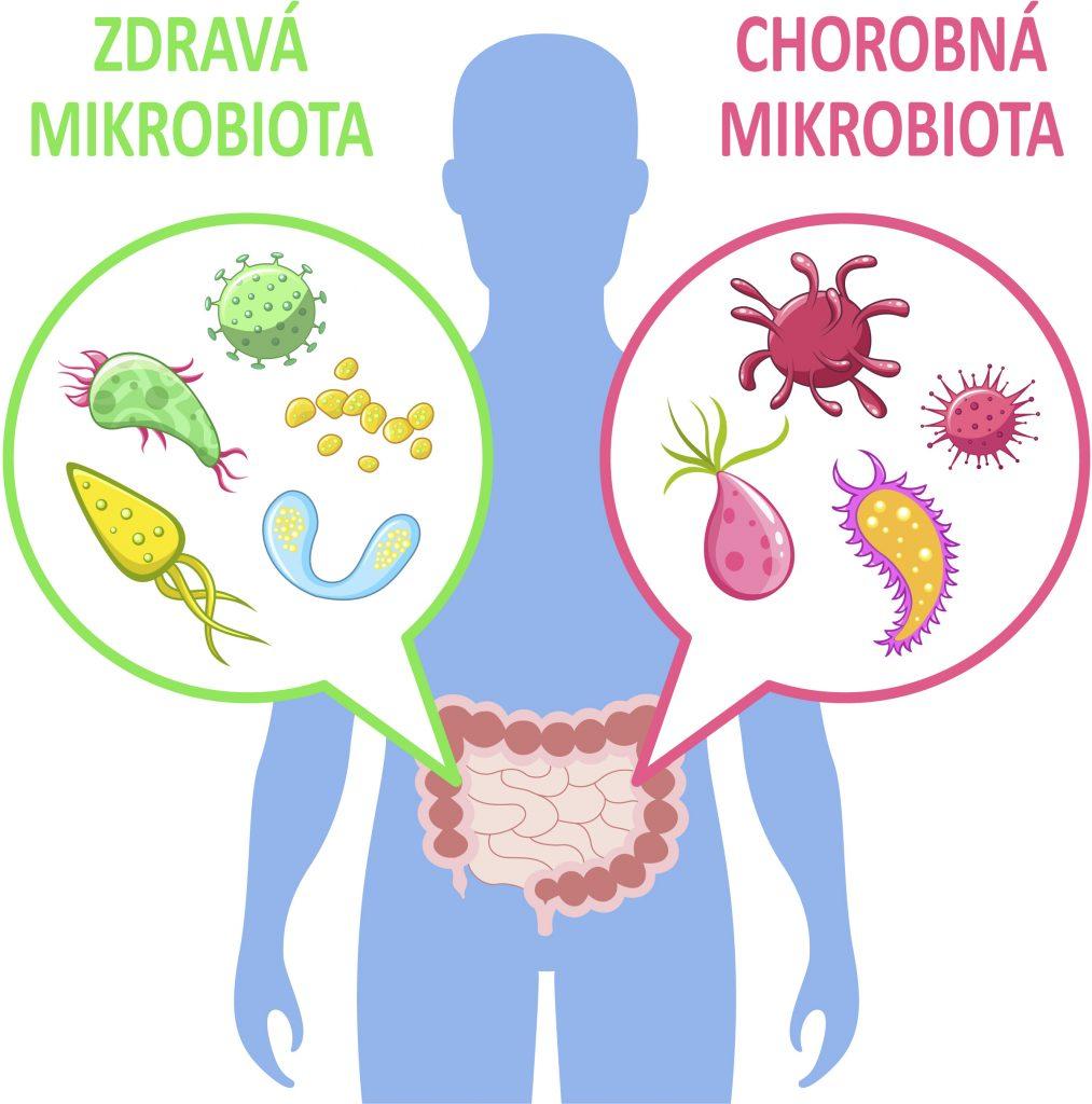 mikrobiota človek